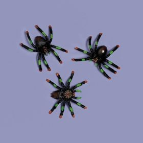 Assorted Spiders